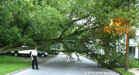 Chief Kasko evaluates the downed tree on Washington Avenue.